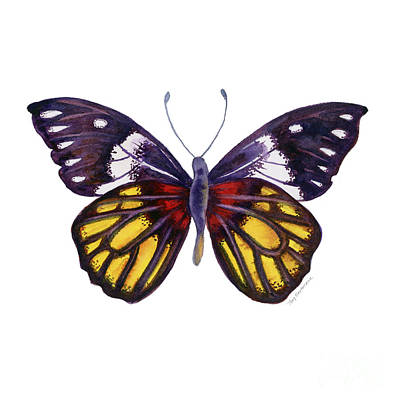 Painting - 31 Delias Henningia Butterfly by Amy Kirkpatrick