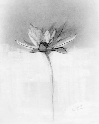 Petal Drawing - Rcnpaintings.com by Chris N Rohrbach