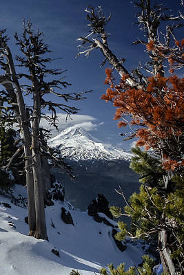 Photograph - Mt Hood From Lookout Mtn by Albert Seger