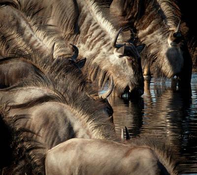 Africa, Namibia, Etosha National Park Art Print by Jaynes Gallery