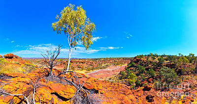 Royalty-Free and Rights-Managed Images - Palm Valley Central Australia  by Bill  Robinson