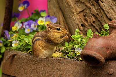 Chipmunk Photograph - Usa, North Carolina by Jaynes Gallery