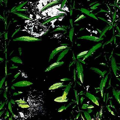 Abstract Wall Art - Photograph - Foliage  by Jason Michael Roust