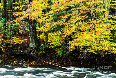 Target Threshold Photography - Williams River Autumn by Thomas R Fletcher