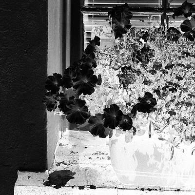 Abstract Wall Art - Photograph - Flowers In Negative by Jason Michael Roust