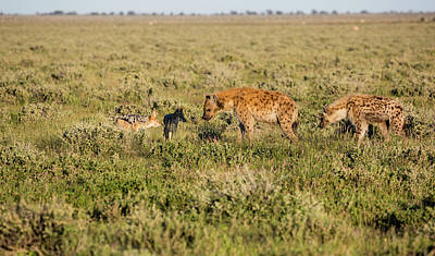 Carcass Photograph - Africa, Namibia, Etosha National Park by Jaynes Gallery