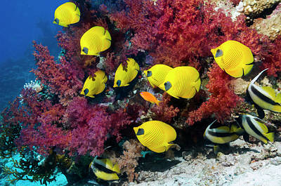 Photograph - Coral Reef Scenery by Georgette Douwma