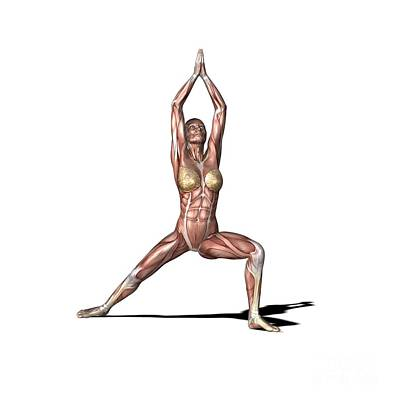 Woman Practicing Yoga Photograph - Female Muscles, Artwork by Friedrich Saurer