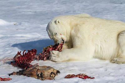 Carcass Photograph - Norway, Svalbard by Jaynes Gallery