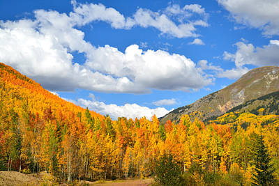 Animal Portraits - Red Mountain Pass Fall Colors by Ray Mathis