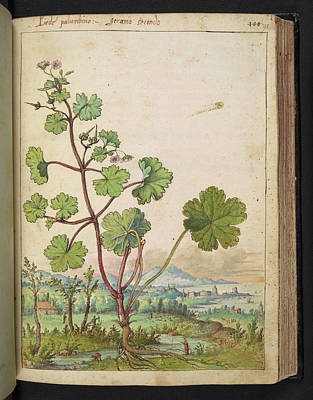 Gathering Photograph - Medicinal Plant by British Library