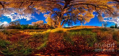 Prescott Digital Art - 360 Under A Tree by Stephen Schwartzengraber