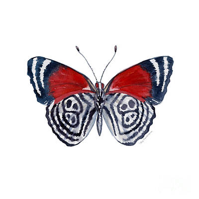 Striped Butterfly Painting - 37 Diathria Clymena Butterfly by Amy Kirkpatrick