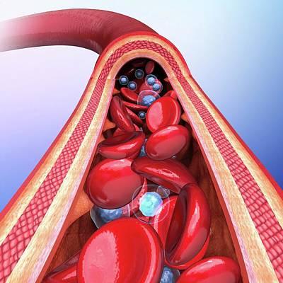 Human Artery Art Print