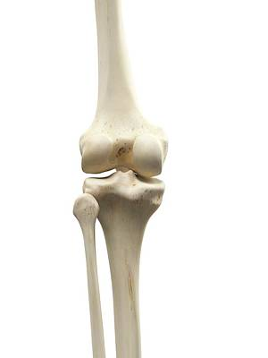 Human Knee Joint Art Print by Sciepro