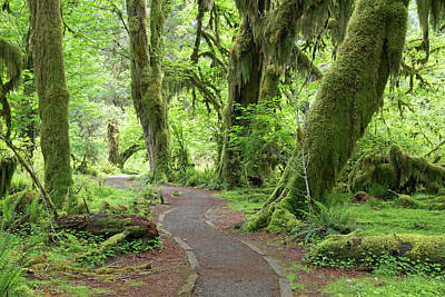 Usa, Washington, Olympic National Park Art Print
