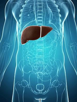 Human Liver Print by Sebastian Kaulitzki