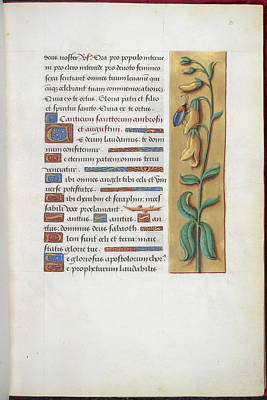 Foxglove Flowers Photograph - Book Of Hours by British Library
