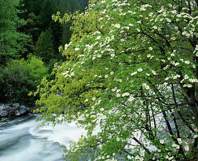 Yosemite Np Photograph - Usa, California, Yosemite National Park by Jaynes Gallery