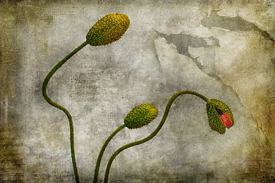 Photograph - 3buds by Zoran Buletic