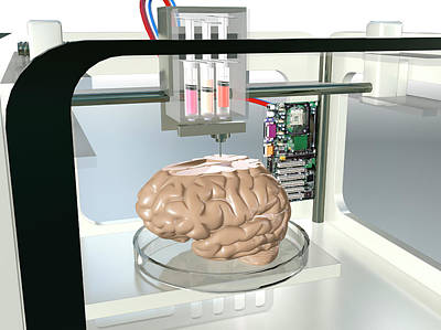 Psychiatric Photograph - 3d Printed Brain by Christian Darkin