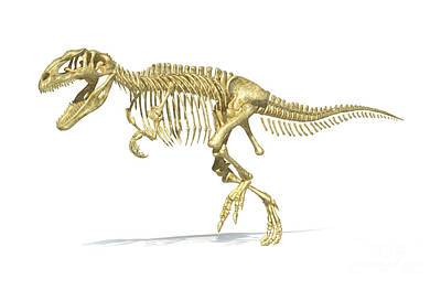 Archaeology Digital Art - 3d Rendering Of A Giganotosaurus by Leonello Calvetti