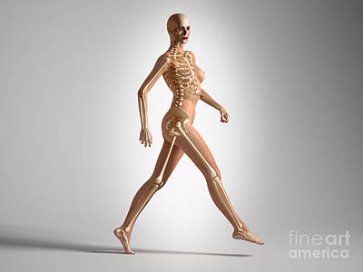 Human Skeleton Digital Art - 3d Rendering Of A Naked Woman Walking by Leonello Calvetti