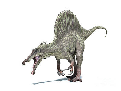 Triassic Digital Art - 3d Rendering Of A Spinosaurus Dinosaur by Leonello Calvetti