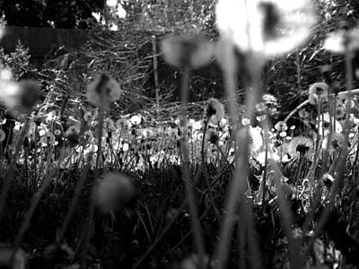 Photograph - 3d Seeds by Tarey Potter