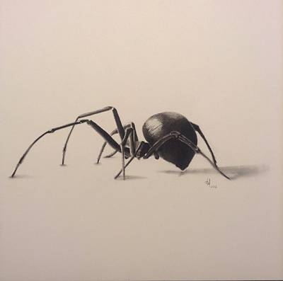Black Widow Drawing - 3d Spider by Aaron Ingle
