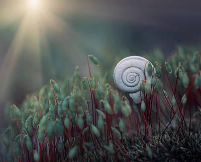Snail Photograph - ....@. by Dimitar Lazarov -