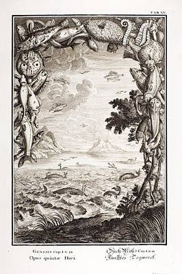 5th Day Of Creation, Scheuchzer, 1731 Art Print