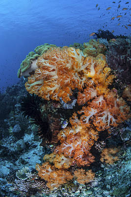Impressionist Landscapes - A Beautiful Cluster Of Soft Coral by Ethan Daniels