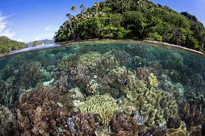 American Milestones - A Healthy Coral Reef Grows In Raja by Ethan Daniels
