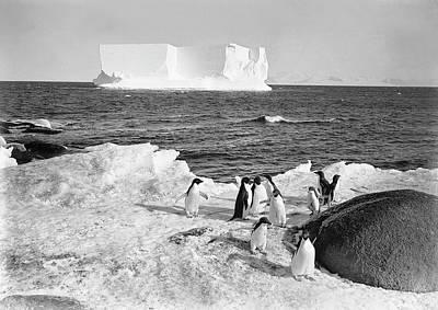 Adelie Penguins In Antarctica Art Print by Scott Polar Research Institute