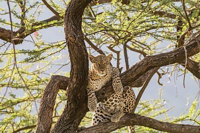 Leopard Cat Photograph - Africa, Kenya, Samburu National Reserve by Emily Wilson