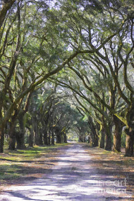 Photograph - Allee Of Oaks Road by Dale Powell