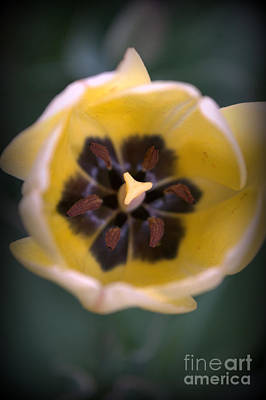 Photograph - Soft Bloom by Anjanette Douglas