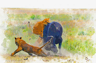 Lioness V Buffalo Original by Don Kuing