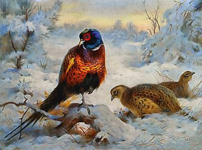 Snow Scene Landscape Painting - Cock And Hen Pheasant In Winter by Archibald Thorburn