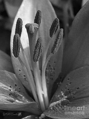Asiatic Lily Hybrid Named Cote D'azur Art Print