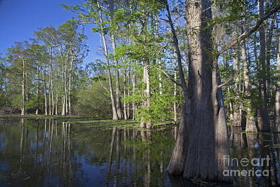 Photograph - Atchafalaya River Basin by Jim West