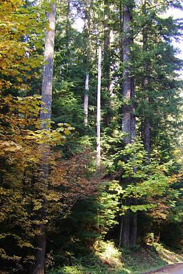 E Photograph - Autumn 8 by J D Owen