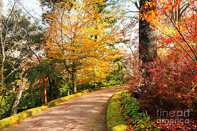 Autumn Colors Art Print by Gaspar Avila