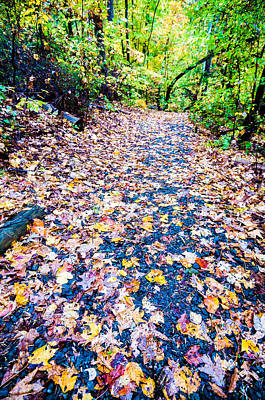 Lake Wylie Photograph - Autumn Country Road by Alex Grichenko