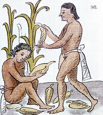 Native Drawing - Aztec Farmers by Granger