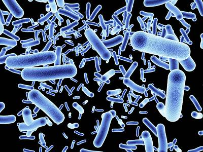 Human Health Photograph - Bacteria by Alfred Pasieka