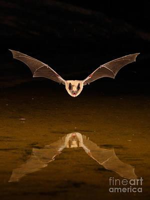 Big Brown Bat Art Print by Scott Linstead