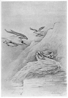 Blackburn Birds, 1895 Art Print by Granger