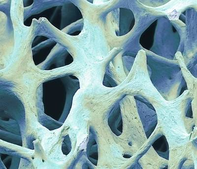 Bone Tissue Art Print